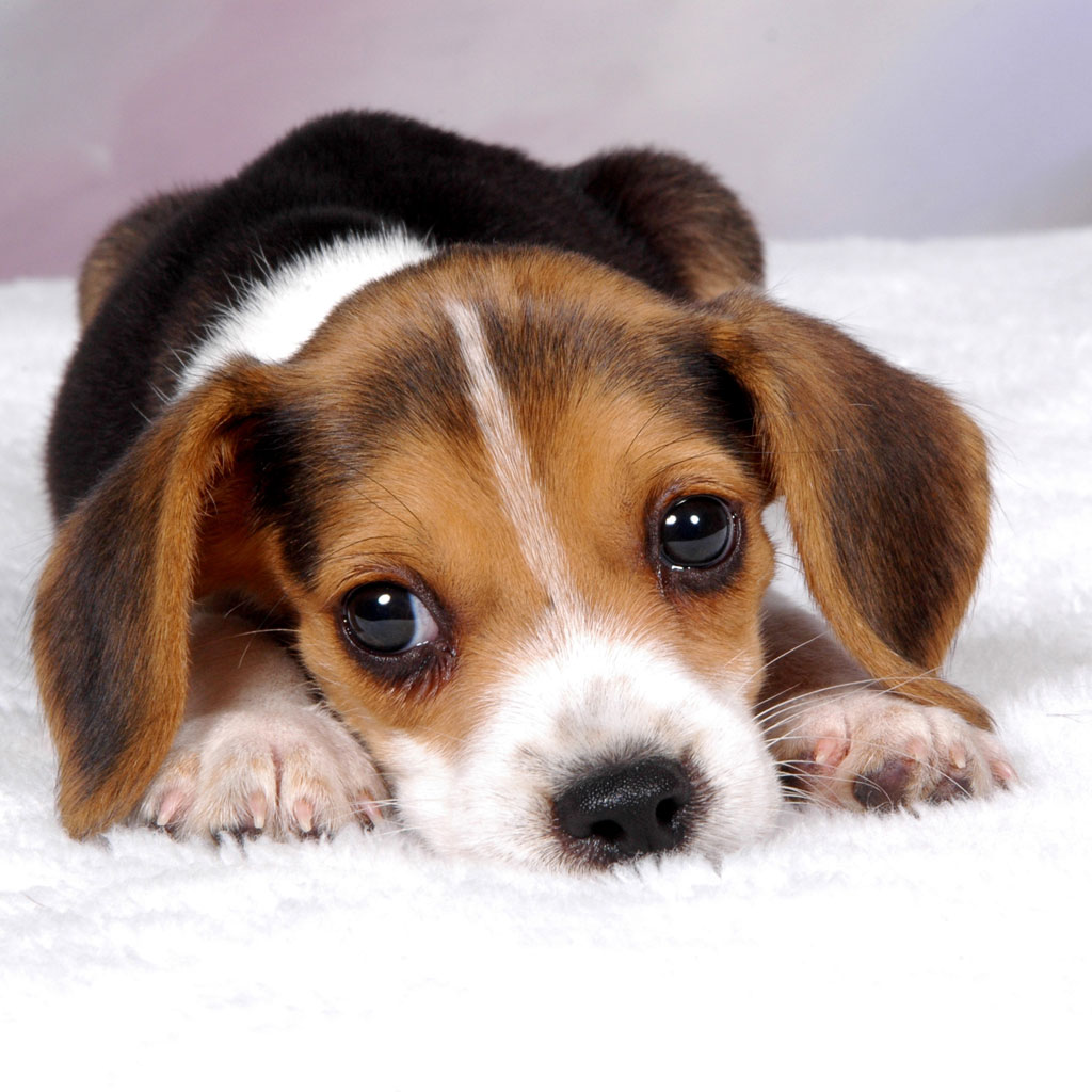 App Icon Free Puppy Dog Wallpaper